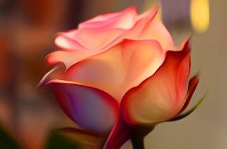 Rose, Roza, hoa hồng, Roses, faqekuq, ruže, roser, roses, roosid, ruusut, Rožės, rōhi, рози, rozen, róże, rosas, Розы, Ro, Rosas, růže, Güller, троянди, rózsák
