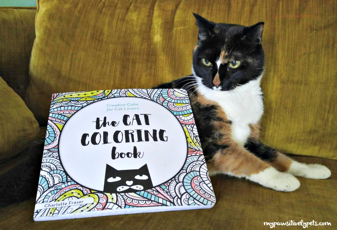 get creative with the cat coloring book pawsitively pets