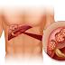Esta Receta de Té de Jengibre Limpia el Hígado, Disuelve Cálculos Renales y Mata las Células Cancerígenas