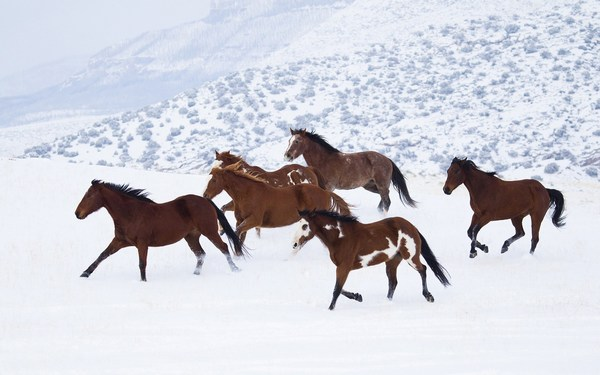 Horses Running on Ice HD Pictures Widescreen