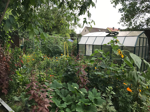 Bio-Gemüse-Garten im August (c) by Joachim Wenk