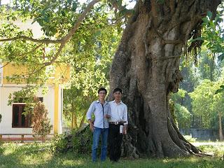 Cây Đa Nguyễn Trung Thiên