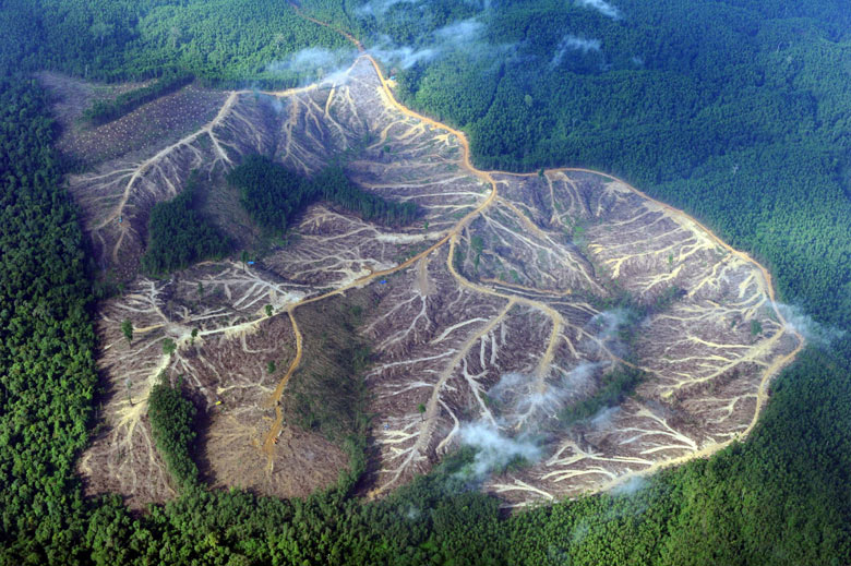 environmental hazards deforestation