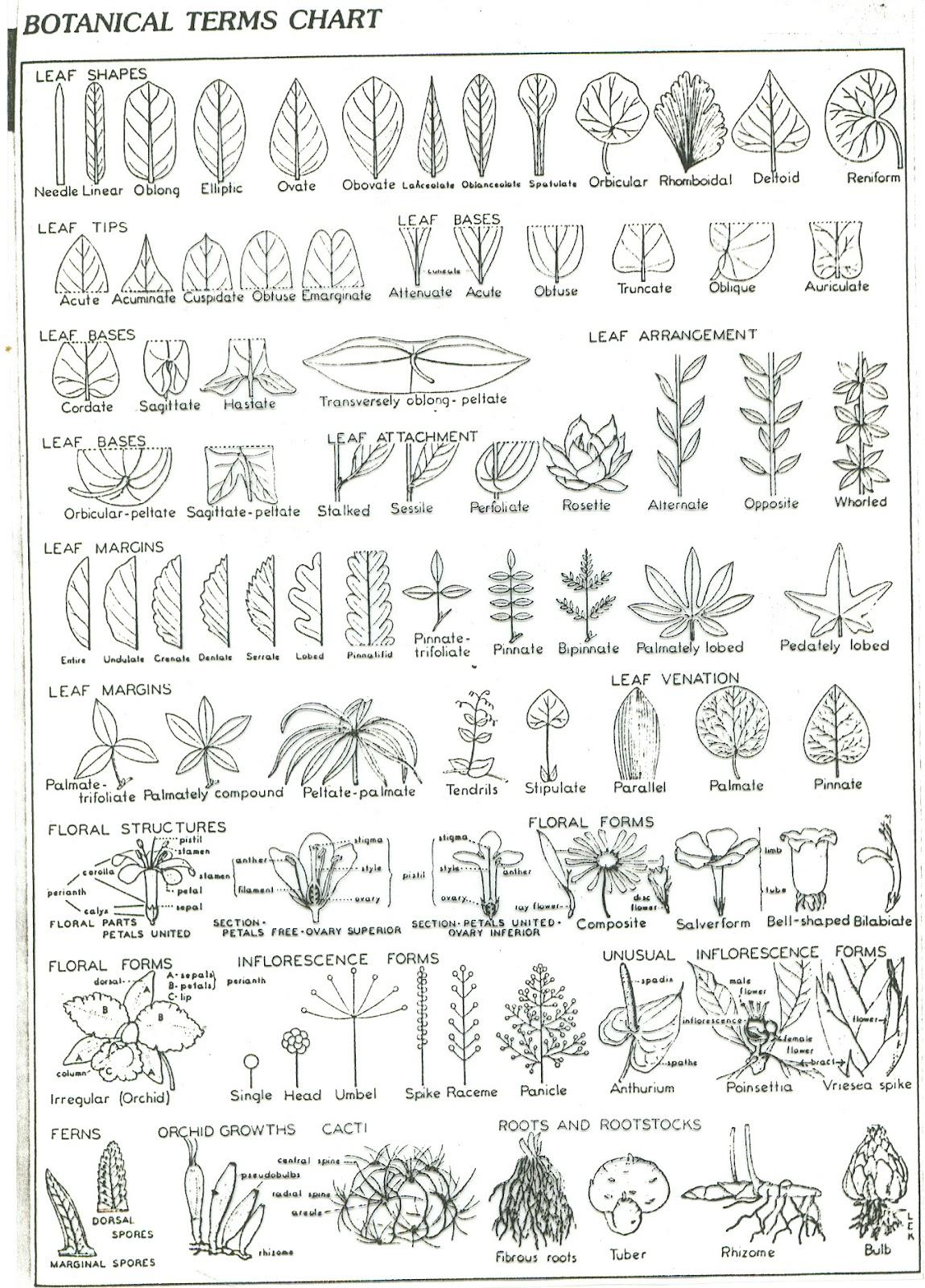 AgriHunt: Botanical leaf shapes