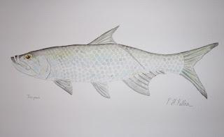 Tarpon, Pat Kellner, P. H. Kellner, Fishing Art, Fly Fishing Art, Texas Freshwater Fly Fishing, TFFF, Fly Fishing Texas, Texas Fly Fishing