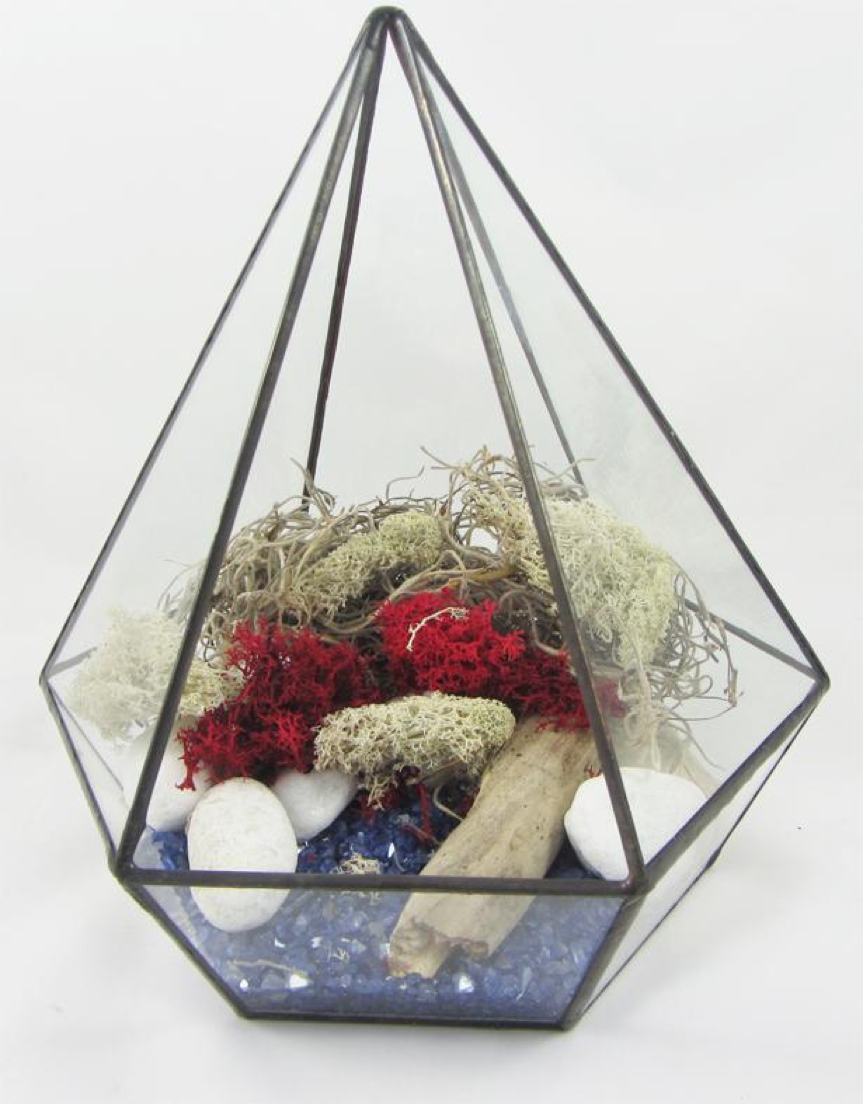 Mrs Crafty B How To Create Your Own Air Plant Terrarium