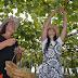 Do Sul catarinense, Uva Goethe recebe certificação internacional