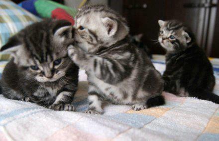 funny+cat+picture+whisper.jpg