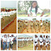 The Secret That You Never Knew About NYSC-PCMs Take Note