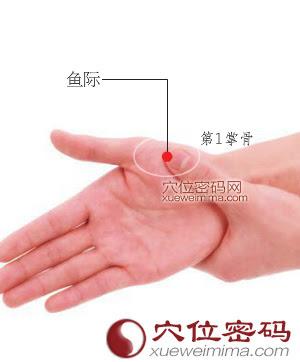 魚際穴位 | 魚際穴痛位置 - 穴道按摩經絡圖解 | Source:xueweitu.iiyun.com
