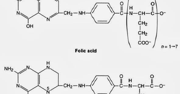 Biochemistry Class notes: RBC Metabolism Notes (Part 4