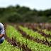 Mais um novo percalço para os produtores rurais: os oportunistas que trabalham por dinheiro e política