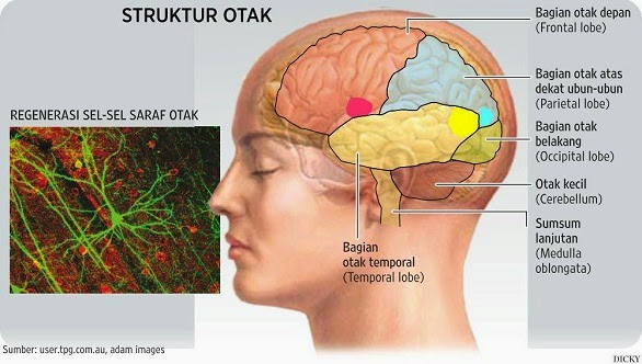 Penyakit yang Berhubungan dengan Sistem Organ Tubuh Manusia