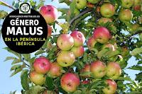 El género Malus son arboles o arbustos caducifolios de tamaño medio de no más de 10 a 12 m. de altura
