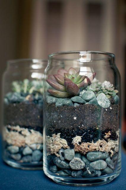 Hiasan Pokok Cactus Yang Sesuai Diatas Meja Pejabat