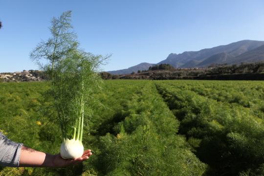 Agricultura destina más de 500.000 euros a las ayudas para proyectos de cooperación agraria dentro del Plan para el Desarrollo Rural