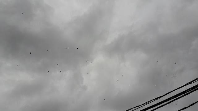 Buitres sobre Beceite lluvia
