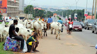 WE WILL NOT SELL OUR BIRTH RIGHT TO HERDSMEN – IGHALA PEOPLE TELL BELLO