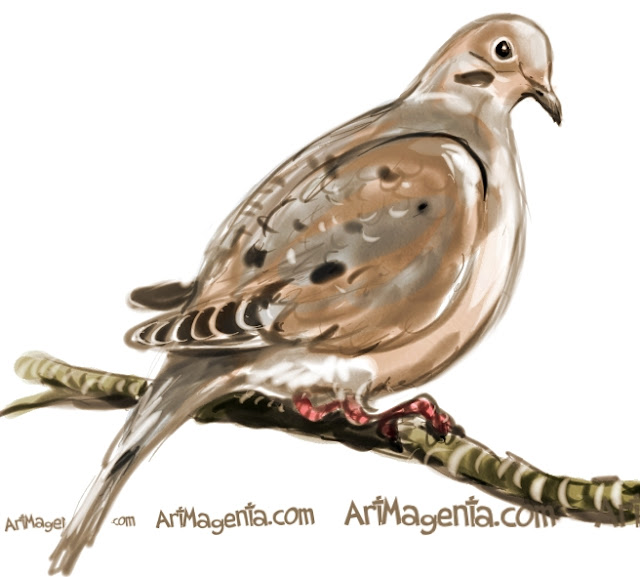 Mourning Dove sketch painting. Bird art drawing by illustrator Artmagenta
