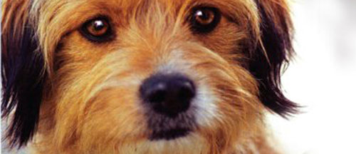 for-the-love-of-benji-new-on-dvd-and-blu-ray