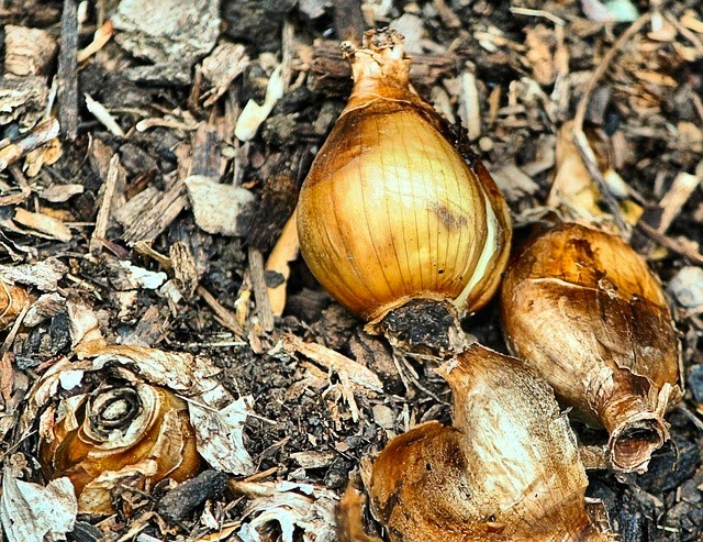 Tips for Planting Your Favorite Bulbs