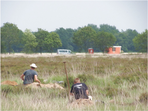 3,000 year old cultivated fields unearthed in the Netherlands