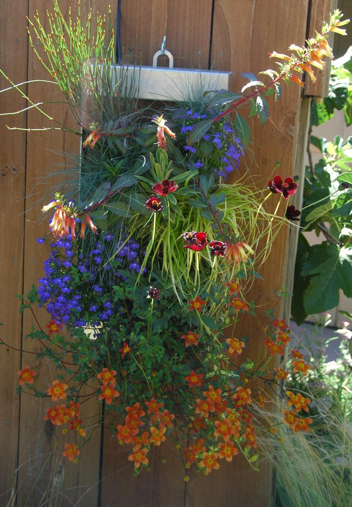 Natural Gardening: July 2013