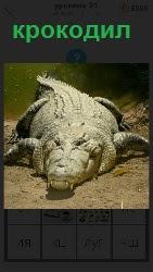 460 слов 4 ползет крупный крокодил по земле 21 уровень