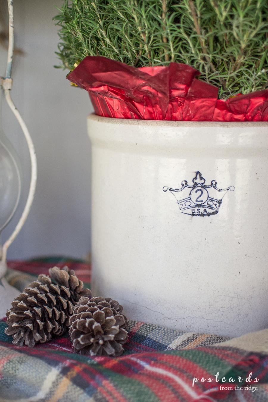 vintage stoneware crock with rosemary tree