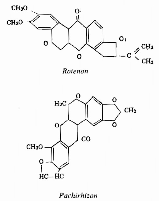 Thành phần hóa học Củ Đậu - Pachyrhizus erosus-Nguyên liệu làm thuốc Có Chất Độc