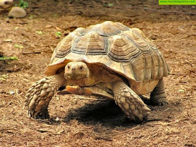 Consternación en el Maroparque por el robo de una tortuga