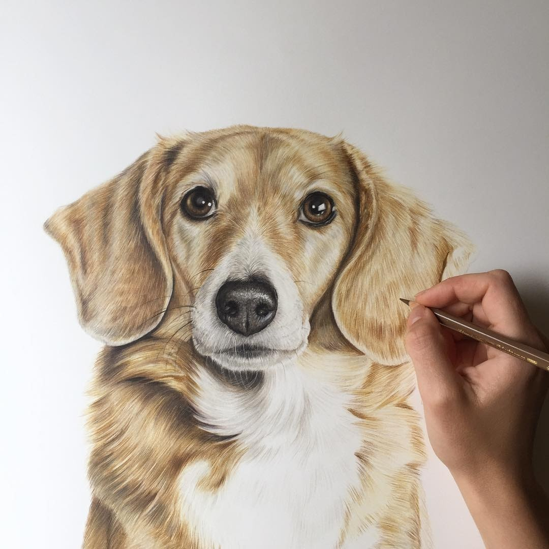 11-Toasty-Zoe-Fitchet-Pet-Portraits-Cats-and-Dogs-Drawings-www-designstack-co