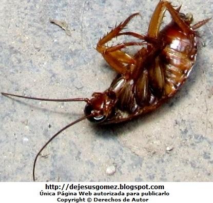 Foto de una cucaracha muerta y de espalda tomada por Jesus Gómez