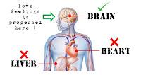 Informasi Cinta: Cinta itu diproses di otak