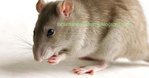 Mimpi melihat tikus mati togel