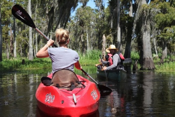 maurepas swamp tour