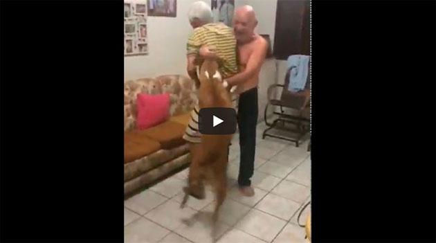 https://www.ahnegao.com.br/2018/07/o-cachorro-torcedor-comemorando-o-acesso-do-seu-time.html