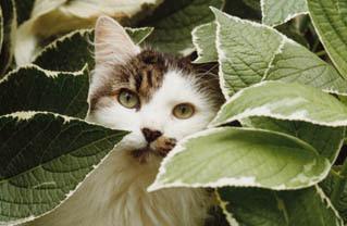 Adote um bichinho plantas t xicas para c es e gatos for Plantas de interior lengua de gato