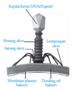 Struktur tubuh bakteriofag
