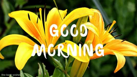 good morning with yellow lily