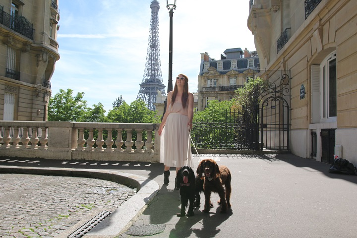Why we love to Travel with our Dogs