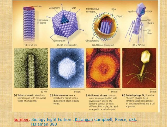 Bentuk Bentuk Virus Pak Pandani Belajar Dan Berbagi