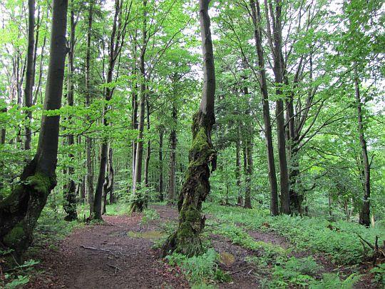 Szlak przez dziwaczny las.