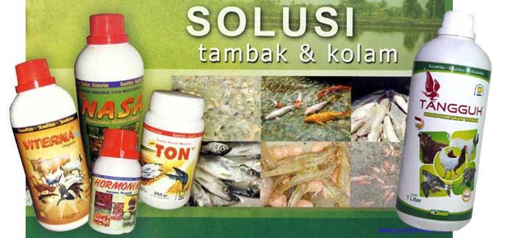 Cara Cepat Pembesaran Ikan Dengan Produk Organik Nasa Organik Nusantara