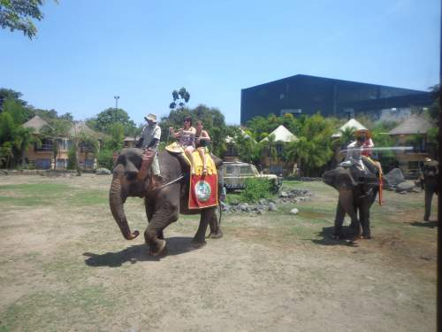 Bali Elephant Riding