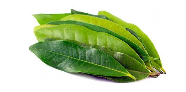 kegunaan daun salam