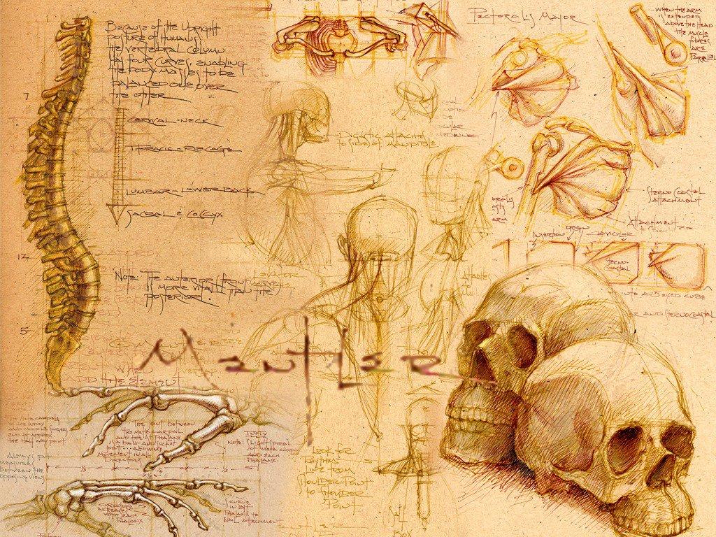 Cual es la Definición de anatomía y Fisiología del cuerpo humano ...