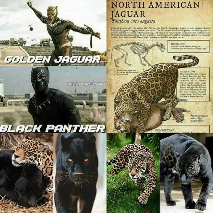 Moors In America Moorish Americans Order Of The Black Panther In