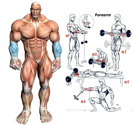 7 Best Exercises For build forearms