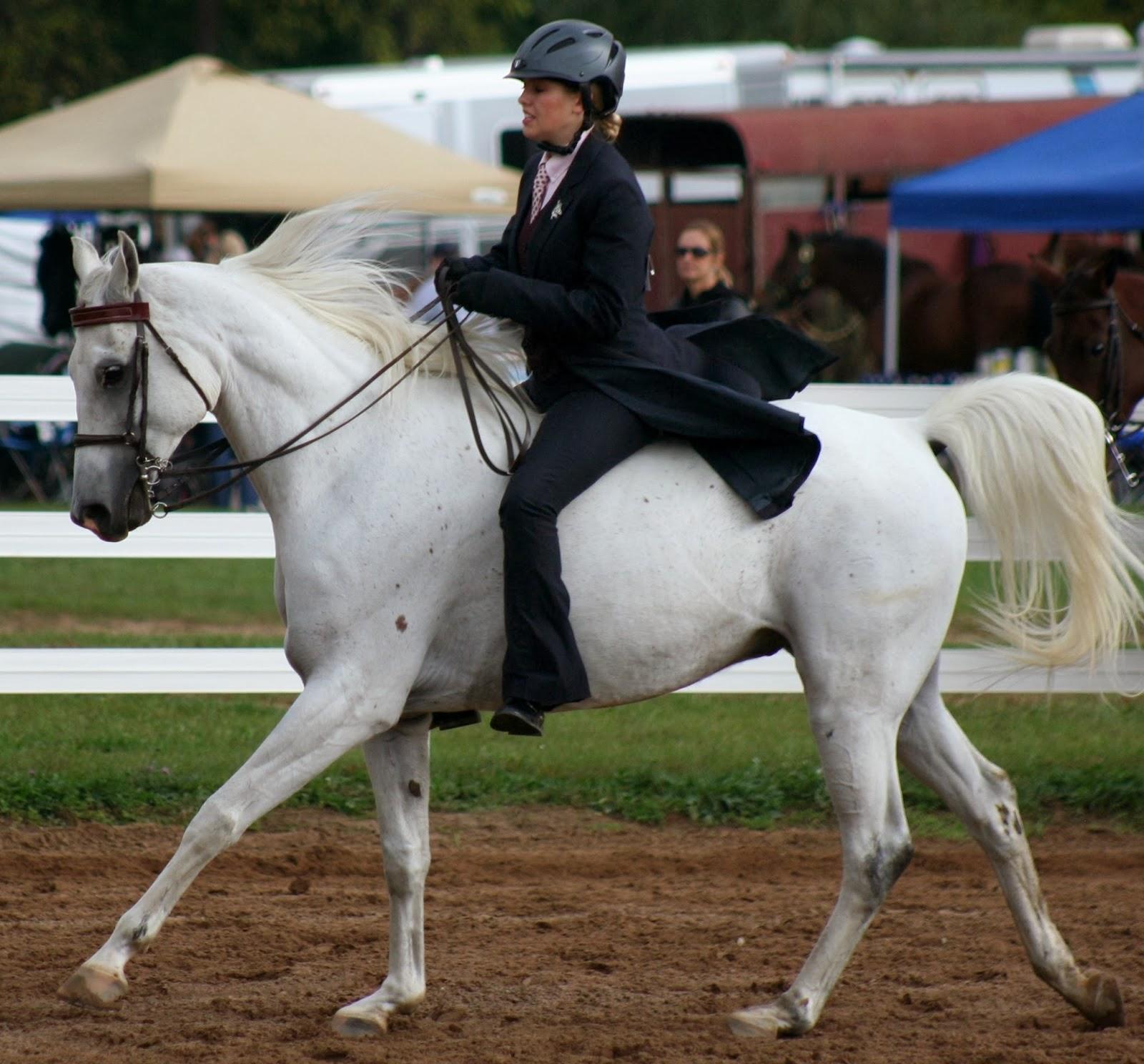 Milford high school equestrian team amusing